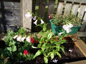 Flower bed 9.09