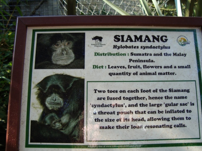 siamang sign